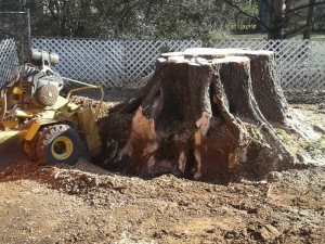Top Tree Service And Stump Removal Company In The Huntsville Area