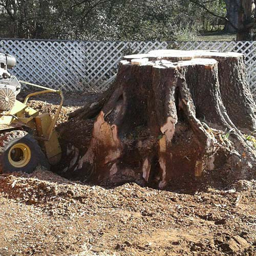 Stump Removal | Stump Grinding Services | Mark Allison Tree Service