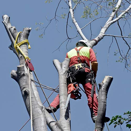 Tree Removal | Tree Maintenance Services | Mark Allison Tree Service